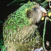 NZ Bird Quiz icon