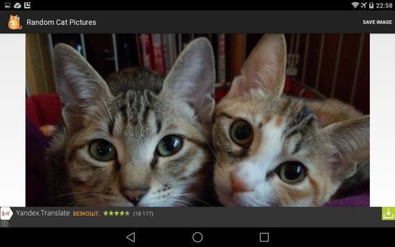 Random Cat Pictures poster