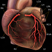 Coronary angiography icon