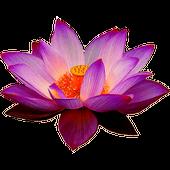 Sri Lanka Radios TV News Chat icon