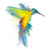 Colourful Ecuador Travels icon