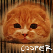 Cooper Cat Club icon