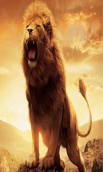 Lion Wallpapers HD poster