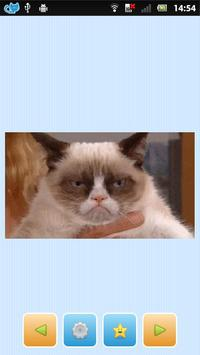 ★ Giffy Cats ★ screenshot 1