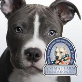 Talking Pit Bull Dogs with AFF icon