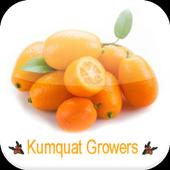 Kumquat Growers icon