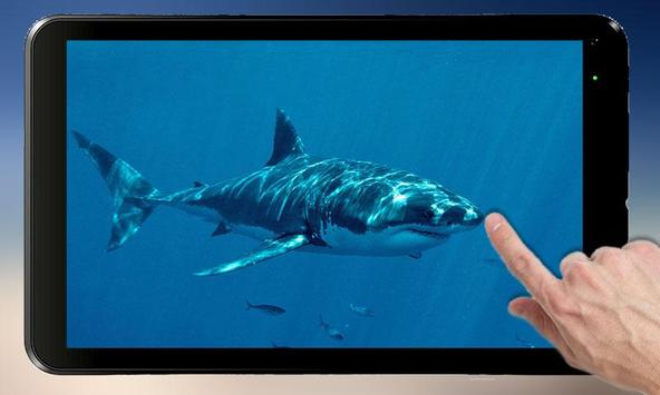Shark Attack - Magic Touch screenshot 3