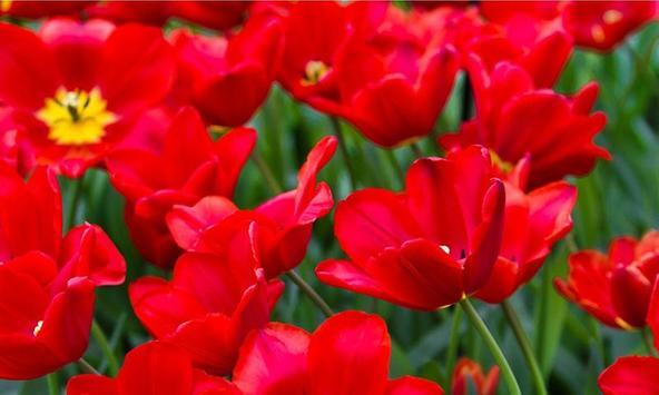 Puzzle: Beautiful Flower screenshot 2