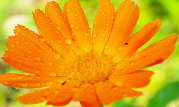Puzzle: Beautiful Flower screenshot 6