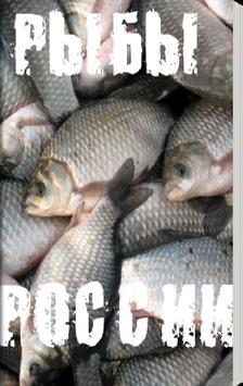 Рыбы России poster
