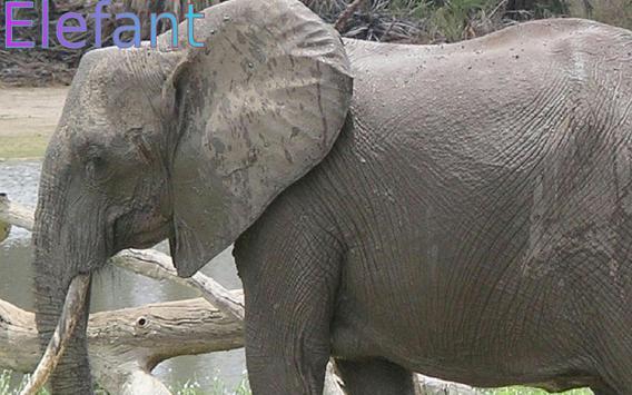 Wild Animals in German p1 screenshot 1