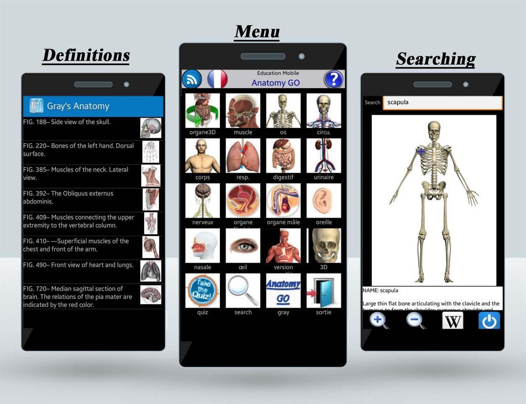 Increíble La Mejor Aplicación De La Anatomía Ornamento - Anatomía de ...