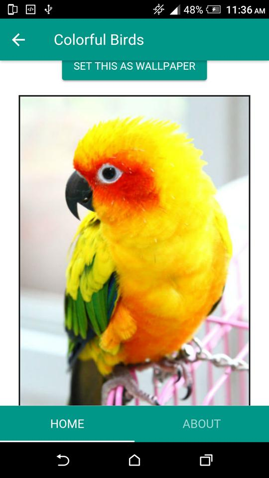 Colorful Birds Wallpaper For Android Apk Download