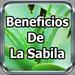 Beneficios De La Sabila