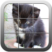 Picture Puzzle Cute Cats icon
