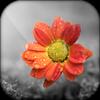 Color Splash - Photo Color Pop 📷 & Photo Recolor icon