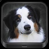 Dog images🐕 icon