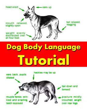 Dog Body Language Training apk screenshot