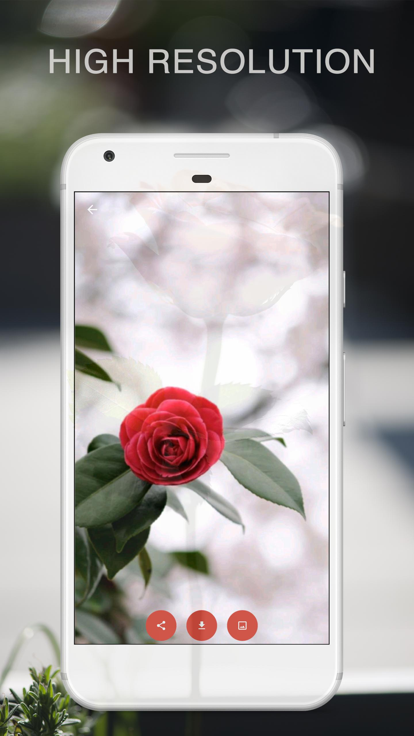 Rose Hd Wallpapers 1080p For Android Apk Download