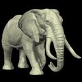 Elephant Mannequin
