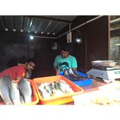 chandan fish center icon