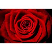 Andrea Rose icon