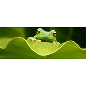 Frog Identification System icon
