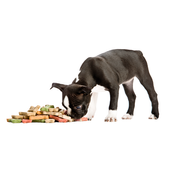 NyNy's Gourmet Dog Treats icon