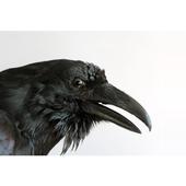Raven Defense Firearm sales icon