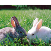 rejected rabbit rescue icon