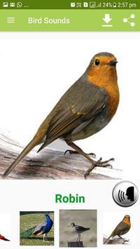 Bird Sound & Pictures screenshot 5