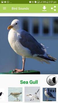Bird Sound & Pictures screenshot 6