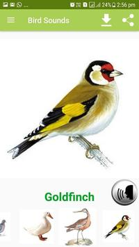 Bird Sound & Pictures poster