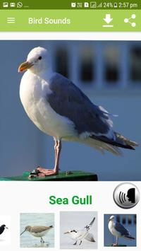 Bird Sound & Pictures screenshot 14
