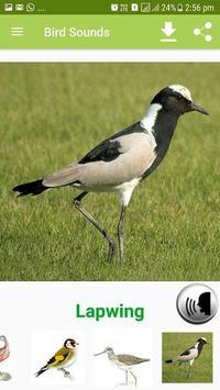 Bird Sound & Pictures screenshot 1