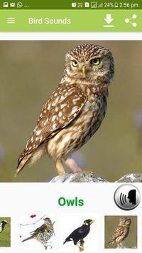 Bird Sound & Pictures apk screenshot