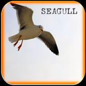 Seagull Bird Sounds icon