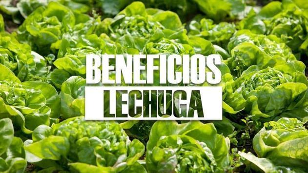 Medicina Natural Lechuga screenshot 2