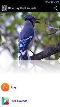 Blue Jay Bird sounds poster