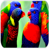 Lovebird sounds icon