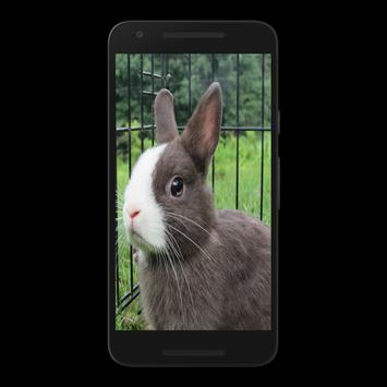 Rabbit Puzzle Game Free apk screenshot