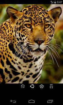 Animales Sonidos y Fondos screenshot 9