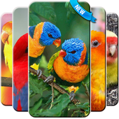 Lovebird Wallpaper Free icon