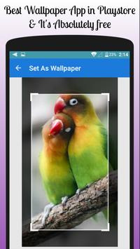 Lovebird Wallpaper Free screenshot 1