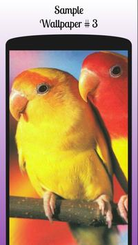 Lovebird Wallpaper Free screenshot 5
