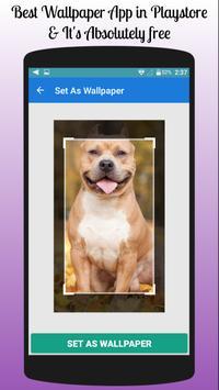 Pitbull Wallpaper Free screenshot 1