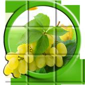 Fruits Puzzle icon