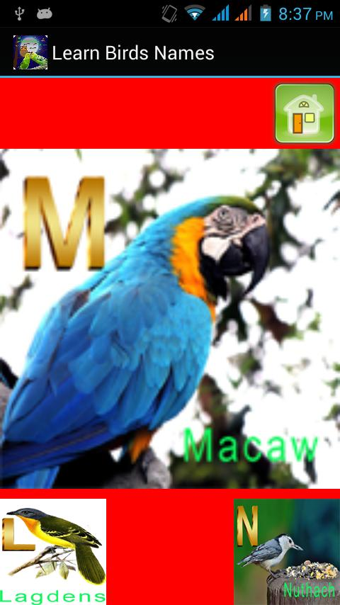 Kids Learning Birds Name for Android - APK Download