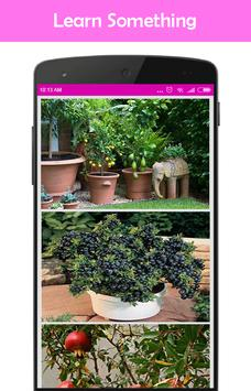 Easy DIY Growing Fruit Trees in Containner poster