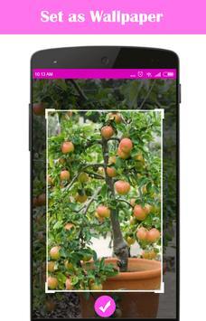 Easy DIY Growing Fruit Trees in Containner screenshot 4